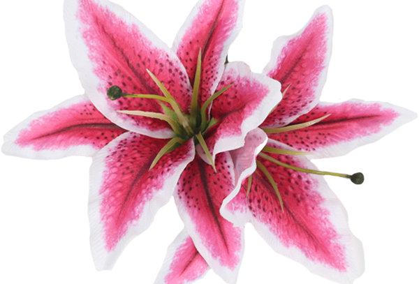 QUEENIE Double Stargazer Lily