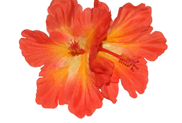 DEBRA Double Orange Hibiscus Hair Flower