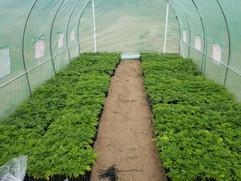 More Greenhouse Plants