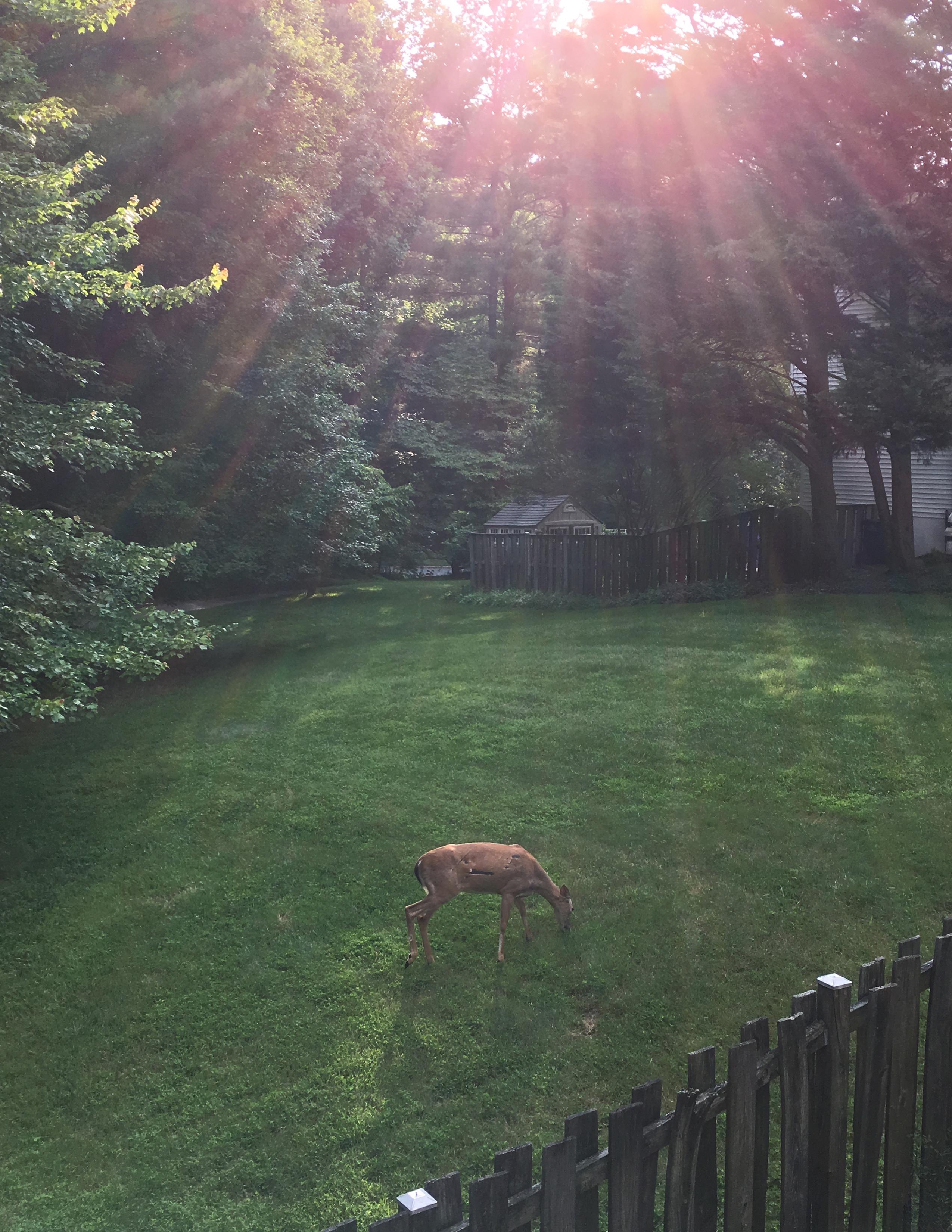 Holy Deer