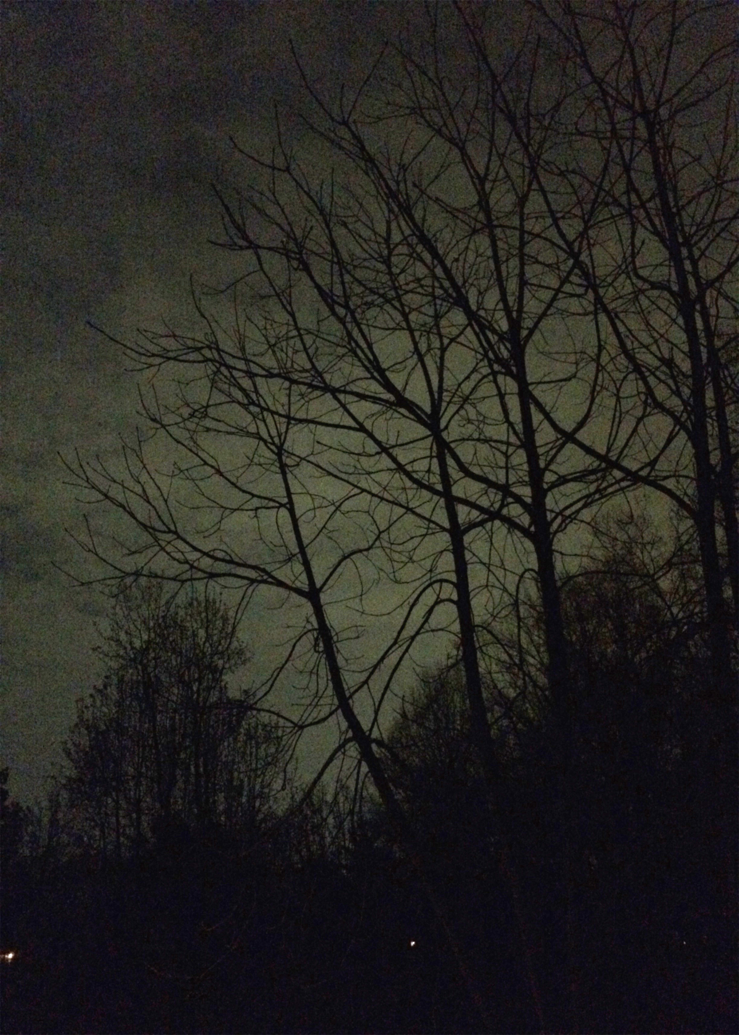 moonlight3