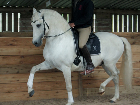 Classical dressage Clinics with Jenny Rolfe.