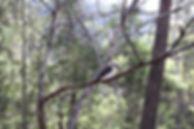 Douglas-Apsley National Park 3 (IMG_0958