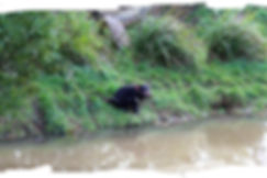 Trowunna Wildlife Sanctuary - Tas. Devil