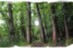 Don Heads - Woodland Walk (IMG_9255) PS