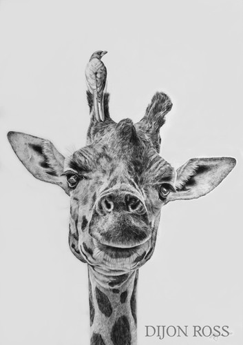 Giraffe Portrait (Commission)