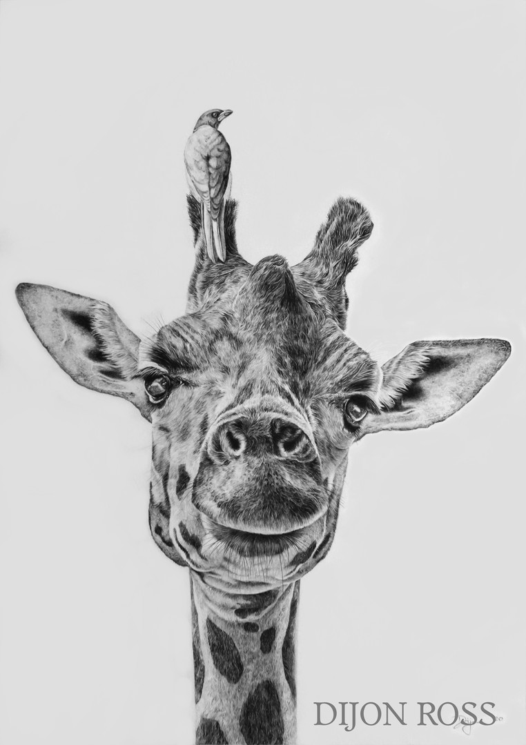 Giraffe Portrait (Commission)