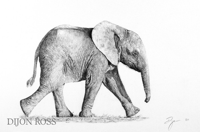 Elephant Calf (watermark).JPG