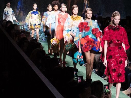 What to See in Fashion Shows?