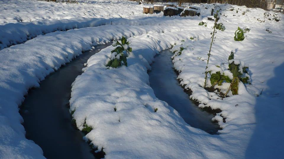 silsburg winter 2014 5