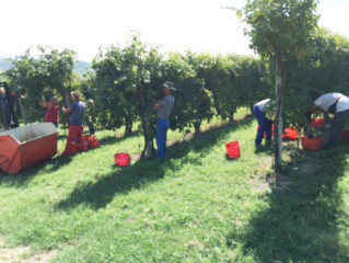 2016 Vintage in our area