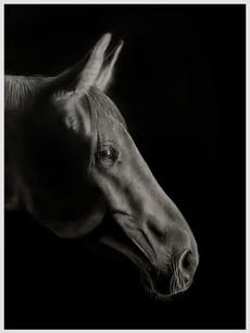Wistful Horse