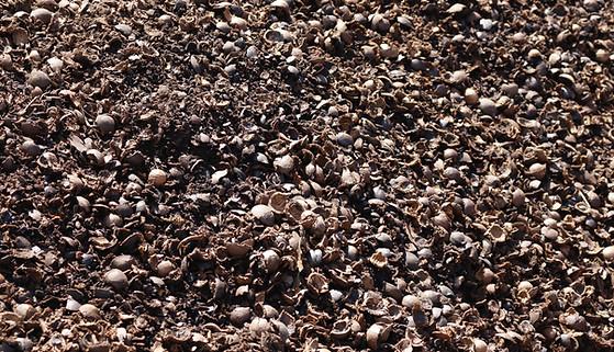Whole Macadamia Husks from Soil Plus