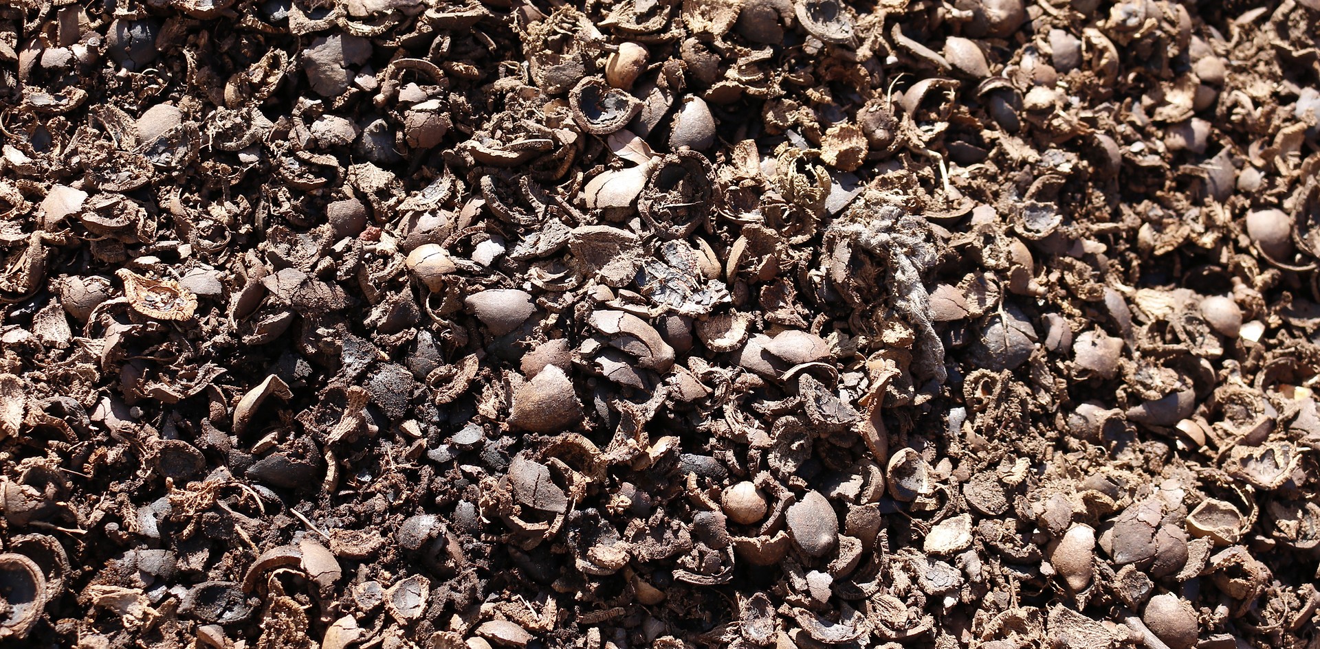 Whole Macadamia Nut Husks