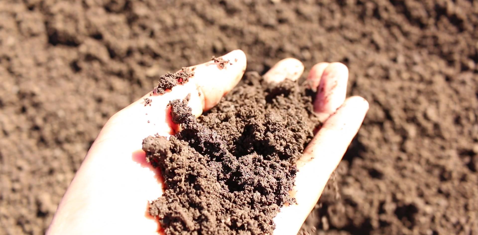 One Third Soil Blend