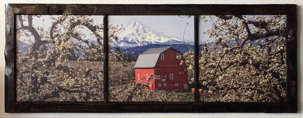 Barn Beset by Blossoms