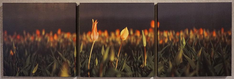 """Tulips at Night"""