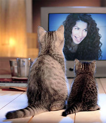 Two Cats Watching tongue.jpg