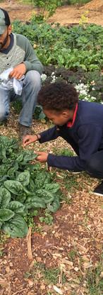 Farm to Fork Kids Program