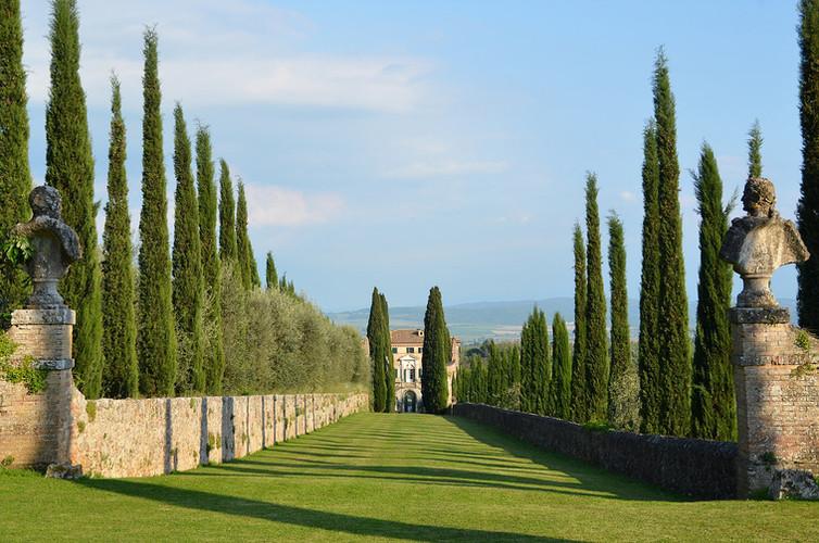 cetinale-trees.jpg
