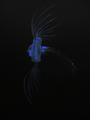 bleu nuit 3