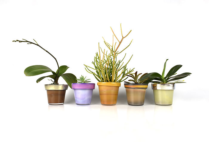 5 planters with plants.jpeg