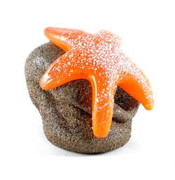 Starfish on Sandy Stone