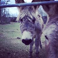 donkey2020.jpg