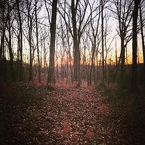 woods2020.jpg