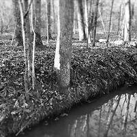 creek2020.jpg