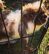 rabbit2020.jpg