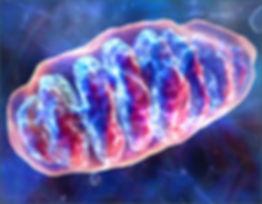 Mitochondrie.jpg