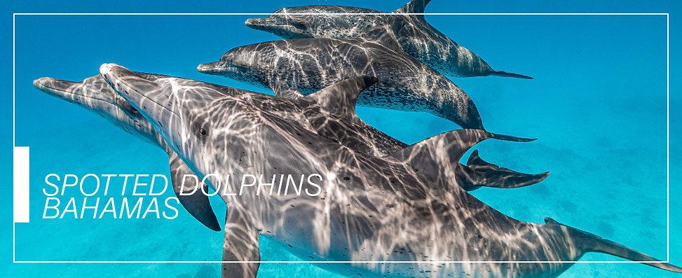 header_DOLPHINS.jpg