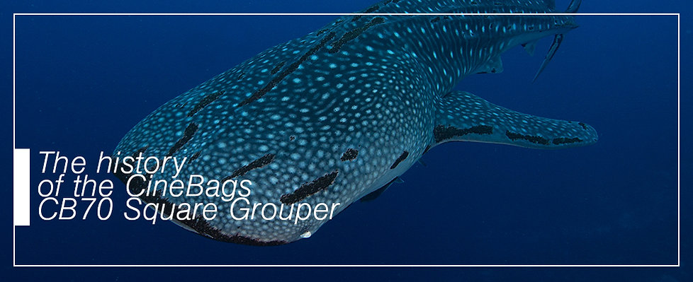 The historyof the cinebags square grouper, whale shark