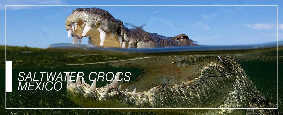 header_CROCS.jpg
