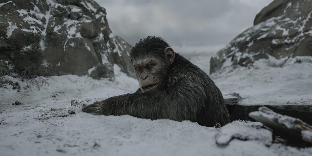 Caesar the Ape