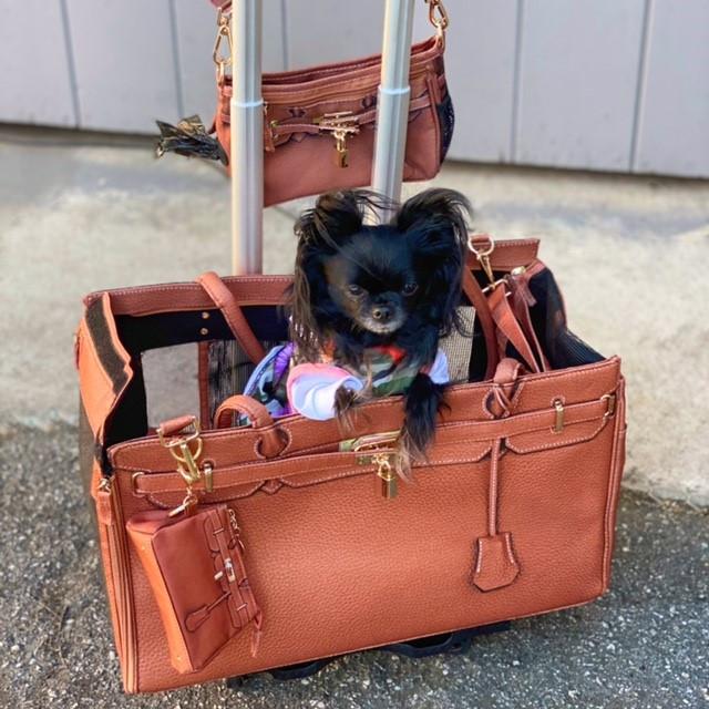 Travel with celebrity influencer DiorABelle!