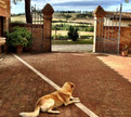 Pet Friendly Journeys - Tuscany Italy
