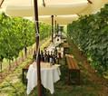 aliveXperiences vineyards vine tasting