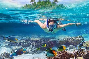 Catalina Snorkeling Excursions Latika Tours
