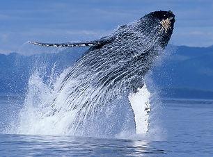 les Baleines de samana Excursions Latika Tours