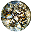NWA 8588 meteorite Thin Section seen through a PetroViewer