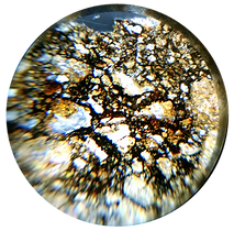 Thin Section seen in a PetroViewer