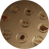 Slightly imperfect thin sections are ultra economical additions to your thin section collection