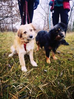 Tofi i Kofi