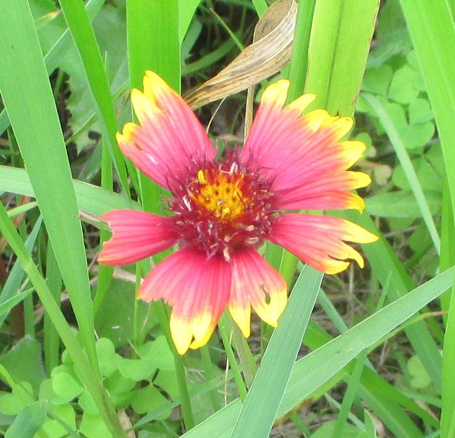 kenwoodflower