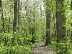 Greening-forest