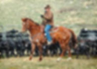 cold cowboy.jpg
