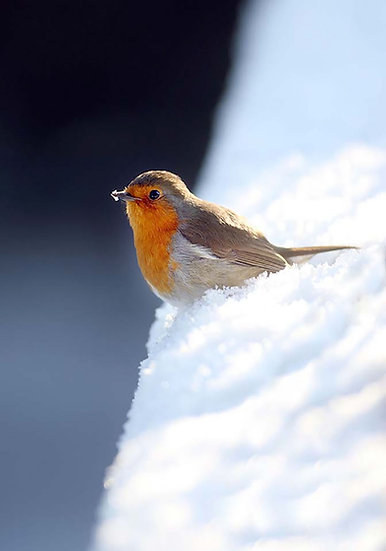 Mr Robin.