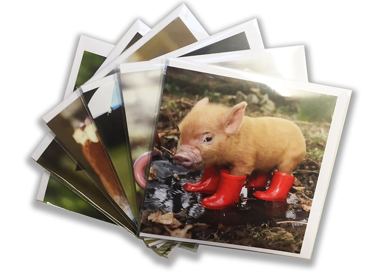 6 Card Packs - Pocket Pigs Collection.